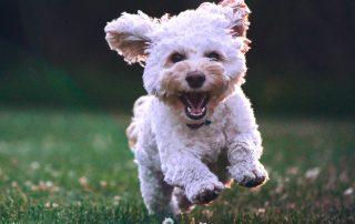 dog happy about pet gadgets